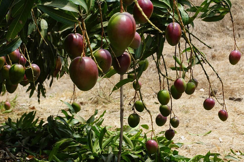 tropicalspecialists-plantation-1