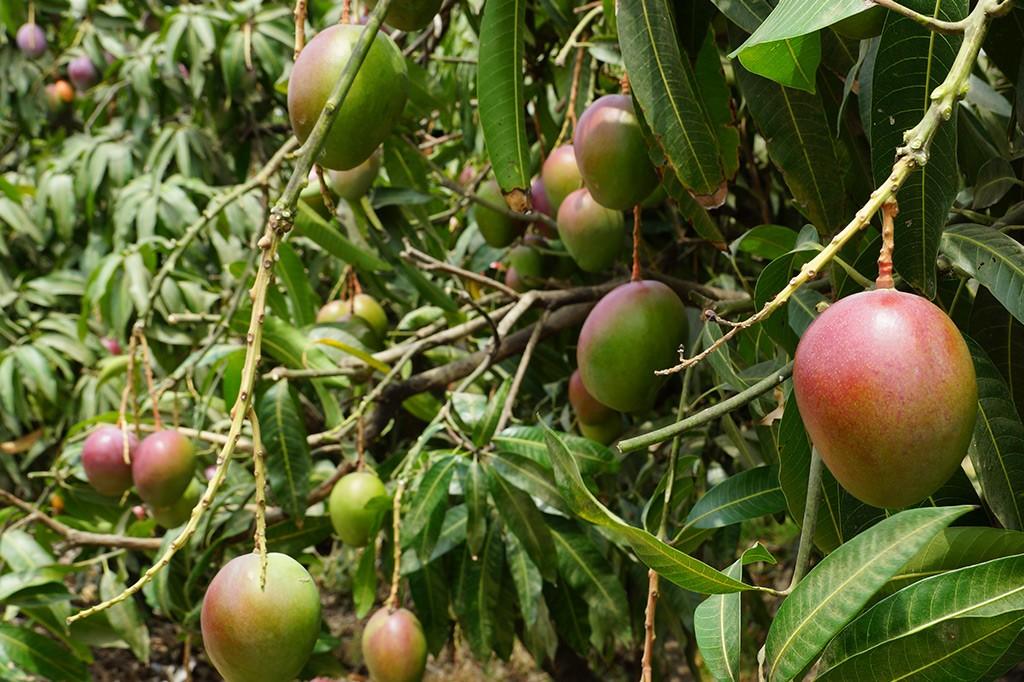 tropicalspecialists-plantation-2