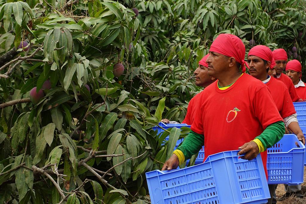 tropicalspecialists-plantation-5